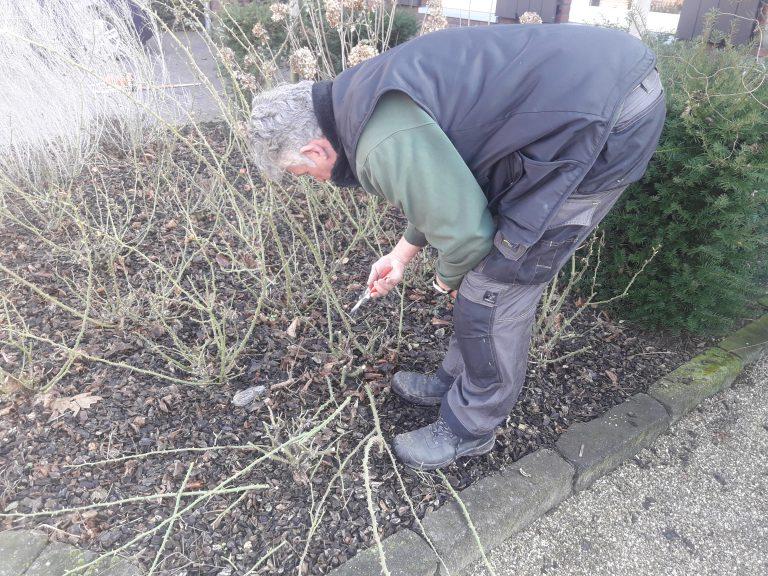 tuinonderhoud knippen snoeien heg snoeischaar